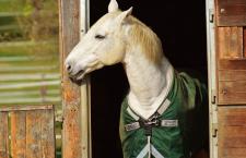 Hoe kies je de juiste huisvesting voor je paard?