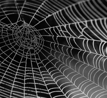De spinnen komen er weer aan