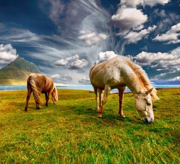 Op wat moet je letten bij de aankoop van een paard?