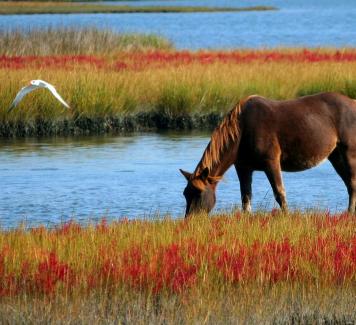 Zo leer je goed communiceren met je paard