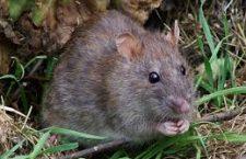 Met deze tips krijg je muizen uit je huis!