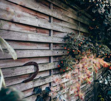 Een gezondere tuin en groen omgeving zonder ongedierten