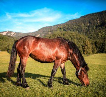 Verhoog de gezondheid van je paard met CBD olie