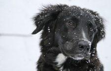 Tips voor het verzorgen van je dier in de winter