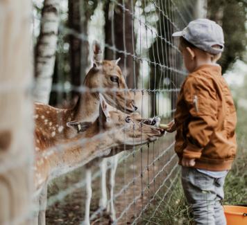 Werken met dieren
