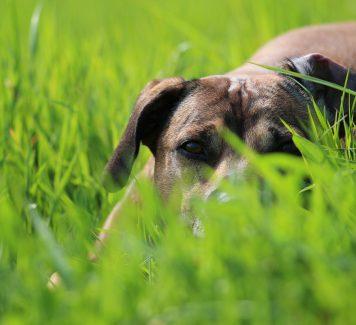Waar op te letten bij het kiezen van een hondenuitlaatservice