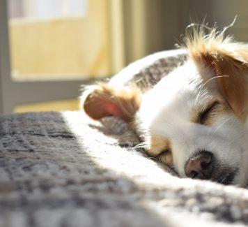 Comfortabel en praktisch, de aangename honden slaapplek!