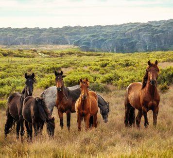 De paardenstalling van het paard is belangrijk