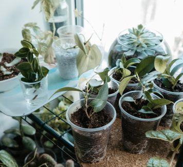 Wat is glastuinbouw en wat zijn de voor en nadelen?